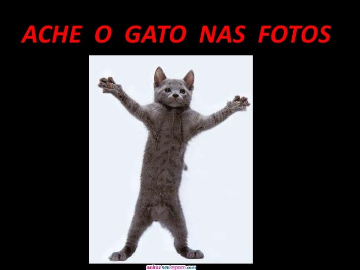 ache-o-gato-1-728